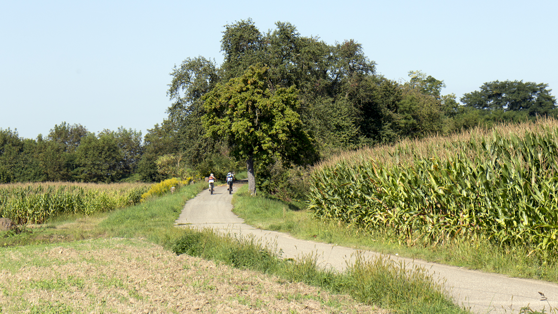 Das Bild zeigt zwei Radfahrer unterwegs in der Ortenau.
